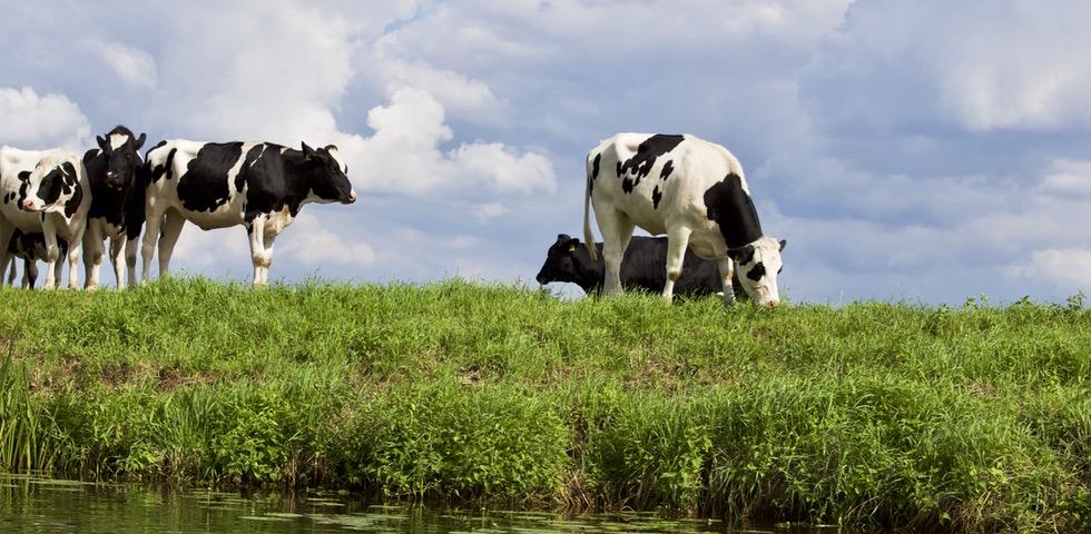 Empresas Rurales, Casos De éxito En Galicia