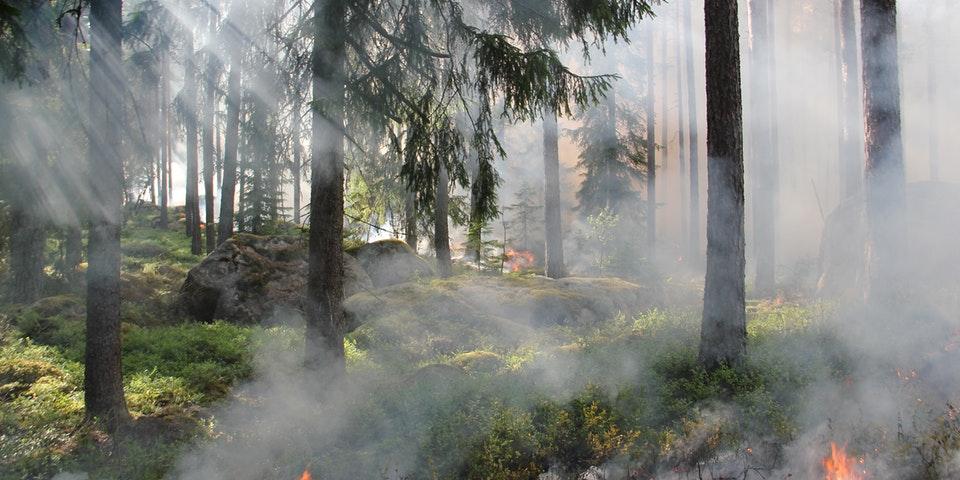 Combatir Incendios Forestales